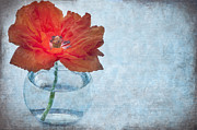 Red Vase Acrylic Prints - Poppy Acrylic Print by Marion Galt