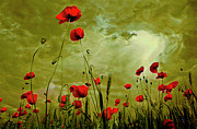 Byron Fli Walker Prints - Poppy Petals Print by Byron Fli Walker