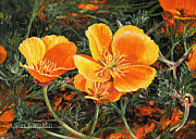California Poppy Paintings - Poppy Power by Lynette Cook