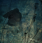 Old Greeting Cards Photos - Poppy Smudge by Larysa Luciw