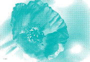 Art Print Digital Art Posters - Poppy White and Turquoise Poster by Jayne Logan