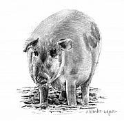 Pig Drawings - Porker Pig - Pride Of The Barnyard by Arline Wagner