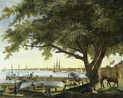 Port Of Philadelphia, 1800 Print by Granger