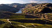 Wine Making Prints - Port Wine Vineyards in the Douro Print by Dias Dos Reis