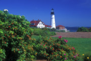Portland Head Lighthouse Framed Prints - Portland Head Lighthouse Beach Roses Framed Print by John Burk