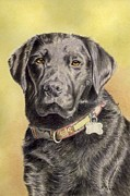 Frances Evans - Portrait Black Labrador