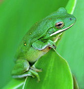Green Photos - Portrait In Green by Jeff R Clow