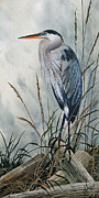 Heron Art - Portrait in the Wild by James Williamson