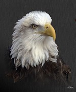 Eagles Digital Art - Portrait Of A Bird by Bill Stephens