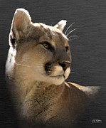 Mountain Lion Prints - Portrait Of A Cat Print by Bill Stephens