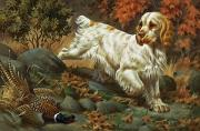 Bird Dogs Posters - Portrait Of A Clumber Spaniel Hunting Poster by Walter A. Weber