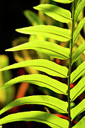 Fern Photos - Portrait of a Fern by Melanie Moraga