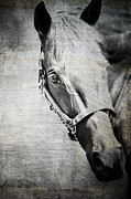 Horse Portraits Prints - Portrait Of A Horse Series III Bele Print by Kathy Jennings