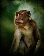 Monkey Digital Art - Portrait of a monkey by Lee-Anne Rafferty-Evans