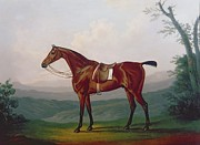 Portraits Paintings - Portrait of a Race Horse by Daniel Clowes