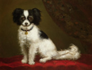 Pet Portrait Paintings - Portrait of a Spaniel by Anonymous