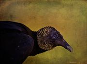 Deborah Benoit - Portrait Of A Vulture