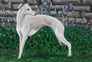 Whippet Dog Framed Prints - Portrait of a Whippet Framed Print by Ron Myers