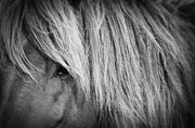 Wildlife Prints - Portrait of a Wild Horse Print by Bob Decker