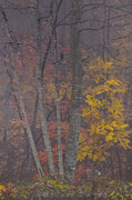 Yellow Leaves Posters - Portrait of Autumn Poster by Rob Travis