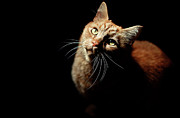 Domestic Animals Art - Portrait Of Cat by James Homer