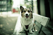 Kobe Photos - Portrait Of Dog by Moaan