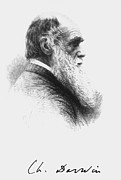 Darwin Photos - Portrait Of English Naturalist Charles Darwin by .