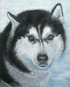 Siberian Husky Paintings - Portrait of Jack-a  Siberian Husky by Pat St Onge