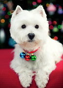 Christmas Lights Art - Portrait Of Puppy by Paul L. Harwood
