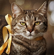 Tabby Prints - Portrait Of Tabby Cat With Yellow Ribbon Print by by Sigi Kolbe