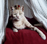 Domestic Animals Posters - Portrait Of White Cat With Crown On Head Poster by by Sigi Kolbe