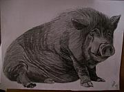 Pig Drawings - Portrait Pencil Sketch U Provide Picture by Pigatopia by Shannon Ivins
