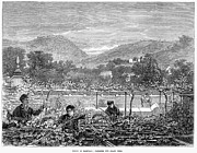 Pruning Framed Prints - Portugal: Vineyard, 1873 Framed Print by Granger