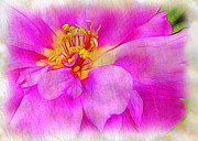 Portulaca With Texture Print by Judi Bagwell