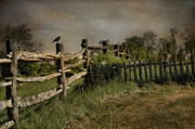 Fences Prints - Post N Picket Print by Robin-lee Vieira