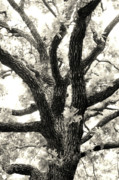 Eerie Digital Art - Post Oak by Jeannie Burleson