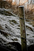 Fence Post Photos - Post With Frost by Odd Jeppesen