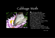 Sonnet Framed Prints - Poster Poem - Cabbage Moth Framed Print by Poetic Expressions