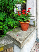 Stoops Framed Prints - Pot of Geraniums on Stoop Framed Print by Susan Savad