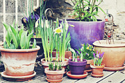 Flower Pot Photos - Pot Plants by Lespetitsriens