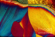 Polarized Prints - Potassium Nitrate Print by Michael W. Davidson