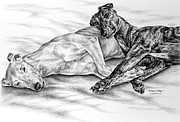 Canine Drawings Framed Prints - Potato Chips - Two Greyhound Dogs Print Framed Print by Kelli Swan