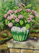 Mark McKain - Potted Pink Hydrangea