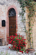 Rocca Posters - Potted Plant in Front of Arched Doorway Poster by Jeremy Woodhouse