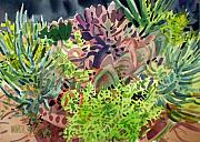 Succulents Posters - Potted Succulents Poster by Donald Maier