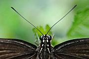 Insect Photo Acrylic Prints - P.o.v. Acrylic Print by Dan Holm