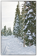 Mountain In Snow Posters - Powdery Snow Path Poster by Lisa  Spencer