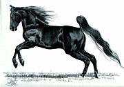 Horse Drawings Framed Prints - Power of the Hind Quarter Framed Print by Cheryl Poland
