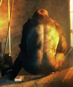 Scott Hovind - Powerful Primate