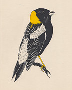 Finch Drawings Prints - Prairie Bird Print by Lauren Busiere